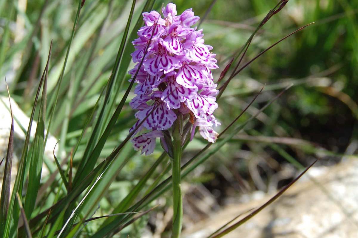 Blomst og vakker natur på Myklebust